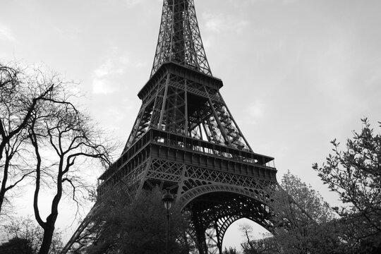 La Tour Eiffel au milieu des arbres