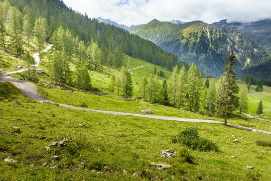Forstweg durch eine bewaldete Almlandschaft in Tirol