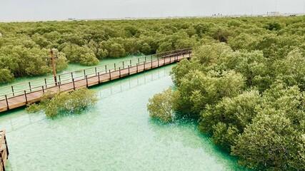 Mangrove forest in Abu Dhabi