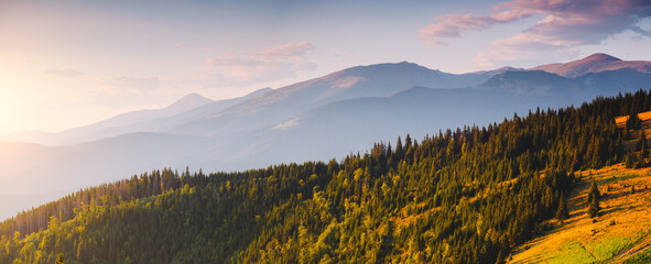 Wall Mural - Panoramic view of mountain landscape with fir forest on a sunny day.