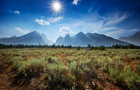 Sage brush and the Tetons in Summer sun in Grand Teton National Park, Wyoming