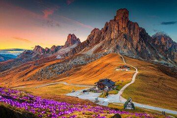 Spring crocus flowers on the slopes in the Dolomites, Italy