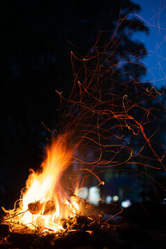 campfire at a picnic in the forest at night