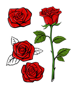 red rose set on white background with leaf