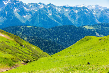 Beautiful mountain landscape with forest at Caucasus mountains.
