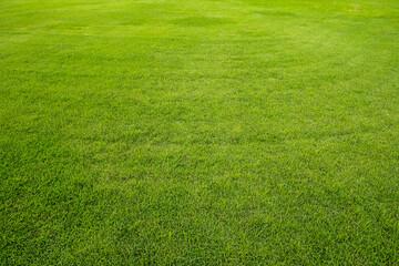 Printed kitchen splashbacks Grass Close-up of green grass background