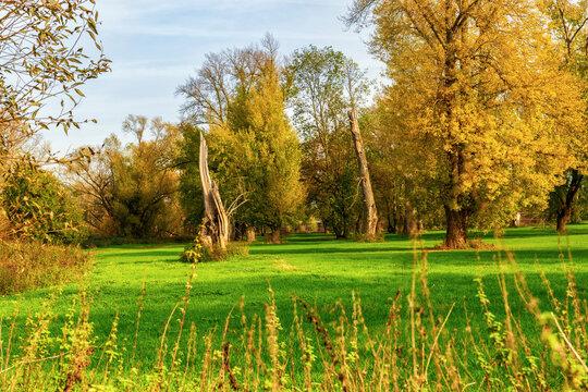 Herbstliche Auenlandschaft an der Sieg bei Bonn