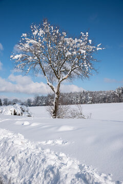snow covered tree in wintry landscape. blue sky