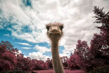 the ostrich looks at you curiously