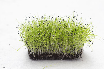 Fototapeta Micro green sprouts of  chives .  Healthy lifestyle. obraz