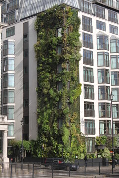 vertical garden of a London building