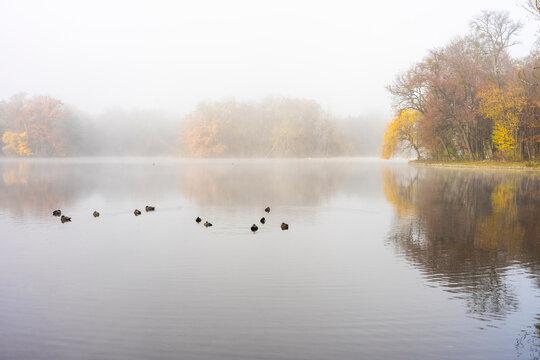 Herbstspaziergang im Schlosspark in München - See mit Enten und Bäumen im morgendlichen Nebel