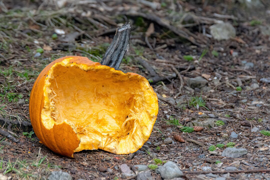 An orange smashed pumpkin lying on the ground on a woods. Only half the pumpkin present. Focus on the inside of the pumpkin.