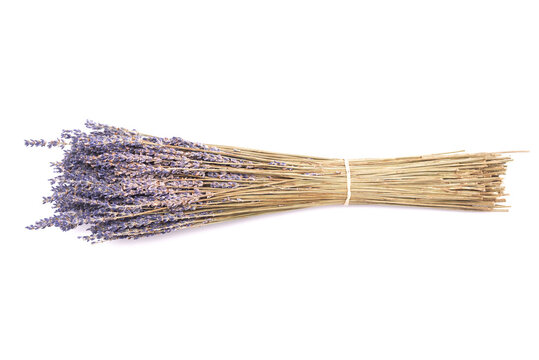 Lavender dried flowers stems isolated on the white background.