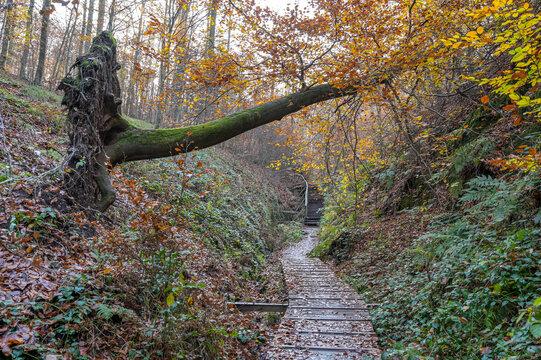 Drachenschlucht bei Eisenach im Spätherbst