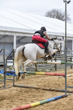 cheval equitation chevaux ecurie saut obstacle cavalier