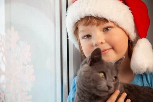 happy boy in santa hat stroking fluffy cat near window