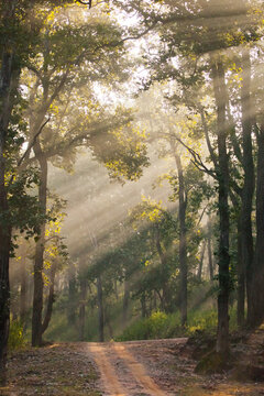 sunny forest, beams of light obliquely and the road, Bandhavgarh. India.