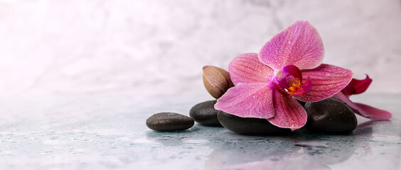 wet orchid flower with spa stones on white marble background. wellness beauty treatment. banner...