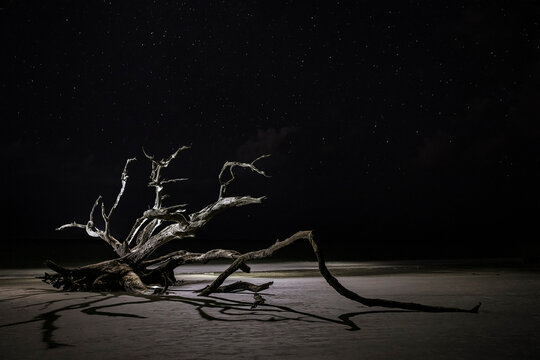 Dead trees on the beach using dramatic lighting at night