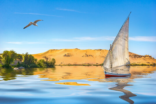 Seagull and sailboat