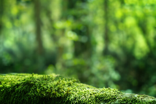 Green moss close up, forest landscape background. Sochi National Park, Yew-boxwood grove