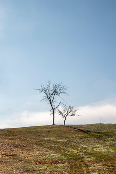 Barren trees on a hill in the winter