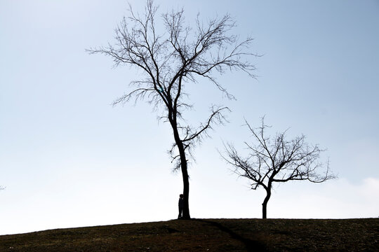 Silhouette of a girl on a hill near a tree