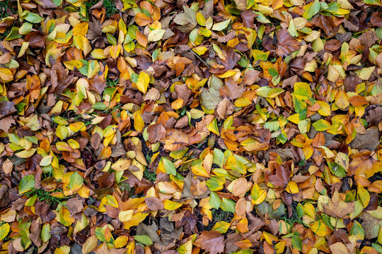 wet autumn leaves on meadow