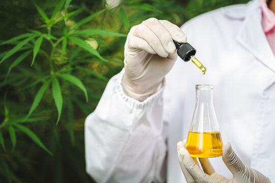 CBD hemp oil, Hand holding bottDrops of Hemp oill, CBD cannabis oil in pipette,    medical marijuana  concept.e of Cannabis oil in pipette.  CBD Hemp oil, medical marijuana oil concept