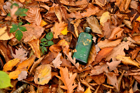 old wine bottle in autumnal painted leaves