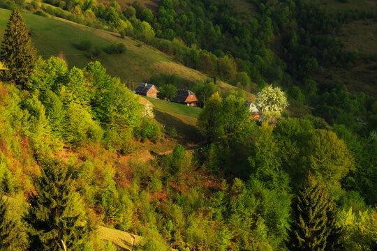 Farmhouse with a blossoming tree on the side of the Carpathian Mountains on a spring evening