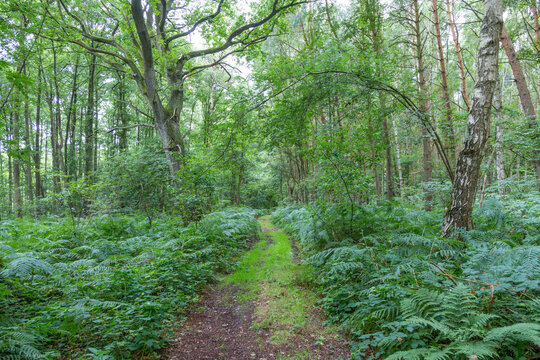 scenic wild forest at the baltic sea in Usedom