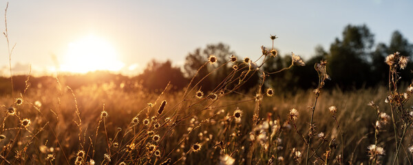 Abstract warm landscape of dry wildflower and grass meadow on warm golden hour sunset or sunrise...