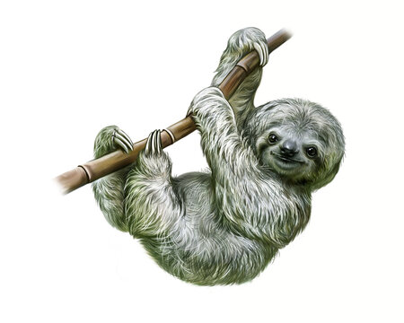 sloth (Folivora)