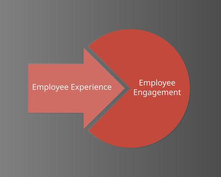 Employee Experience vs Employee Engagement vector