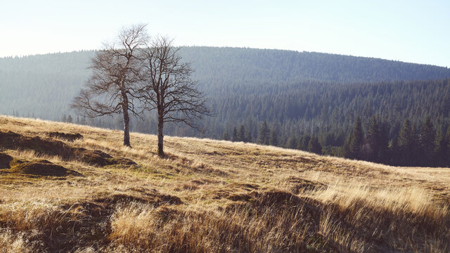 Trees on a mountain meadow, color toned picture.