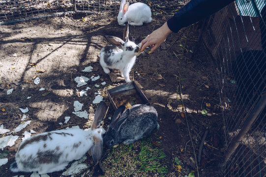man is trying to feed rabbit