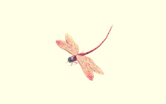 flying red dragonfly isolated on a white background