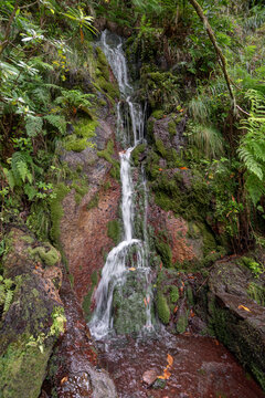 forest water cascade