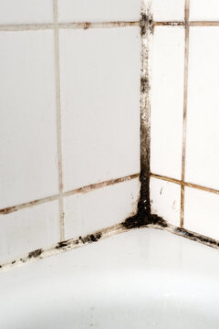 Mould in a bathroom.