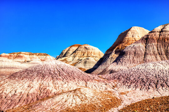 Plant Fossils in Badlands of Petrified Forest National Park, Arizona