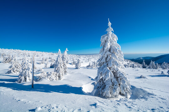 beautiful winter landscape in sunny day