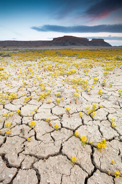Scenic view of wildflowers growing on cracked landscape against Factory Butte