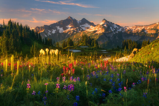 Scenic view of Tatoosh Range with meadow in foreground