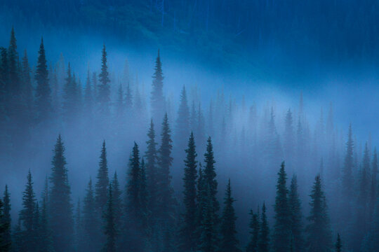 View of trees during fog by Hurricane Ridge in Olympic National Park