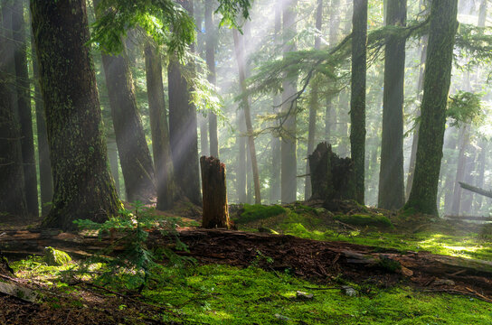 View of trees on Church Mountain in Mount Baker Snoqualmie National Forest