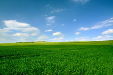 Smooth endless field with lush green grass under a cloudy sky