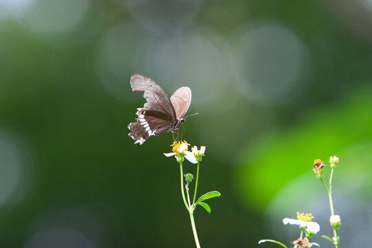 Butterfly at the plant , the nature background