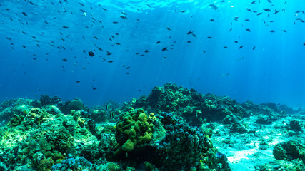 underwater scene with coral reef and fish.